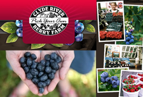 Clyde_River-Berry_Farm
