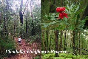 UlladullaWildflowerReserve